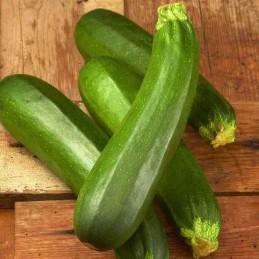 Zucchine Bio 500g