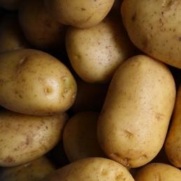 Patata gialla 500g