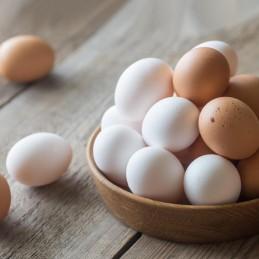 Uova da galline a terra